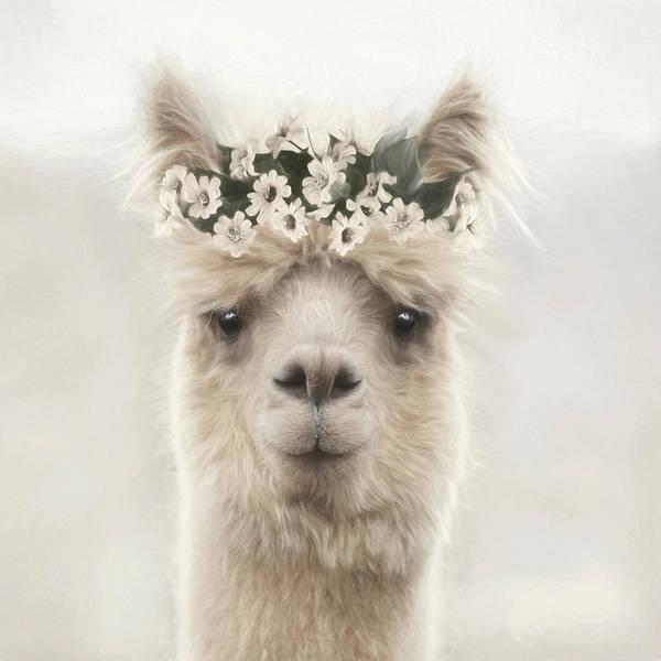 Mammal Mixed Media - Pretty Alpaca by Lori Deiter