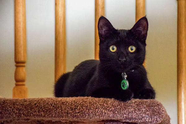 Photograph - Pretty Black Kitten by Jack Peterson