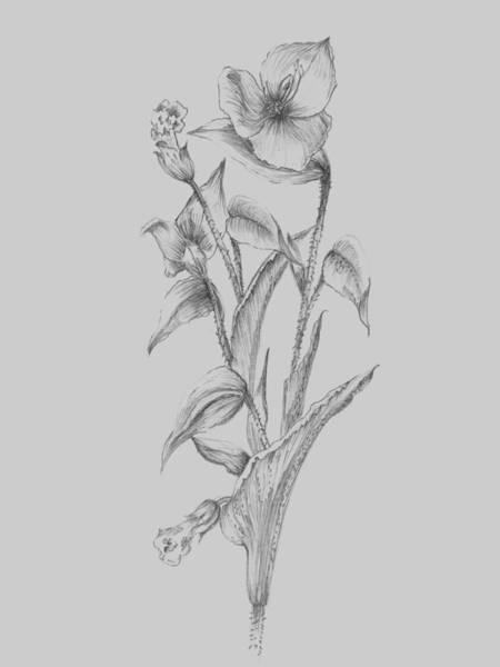 Love Mixed Media - Pretty Flower I by Naxart Studio