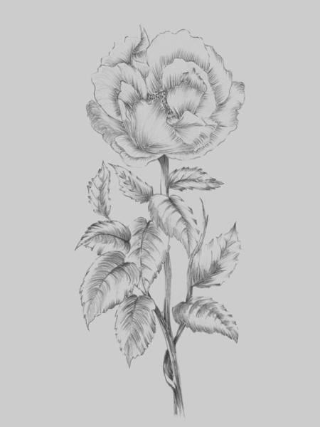 Love Mixed Media - Pretty Flower  by Naxart Studio