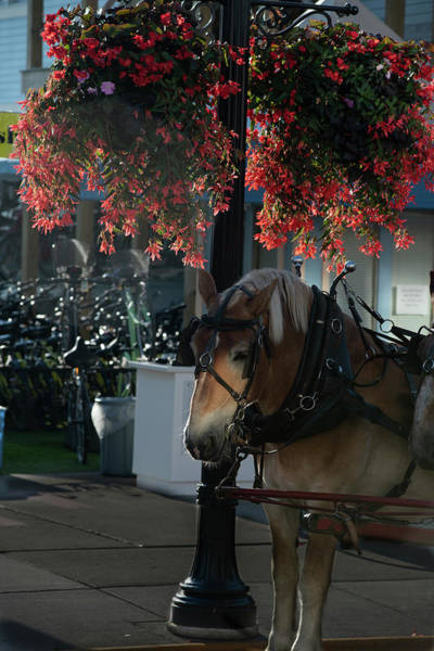 Photograph - Pretty Flowers And Horse by Dan Friend