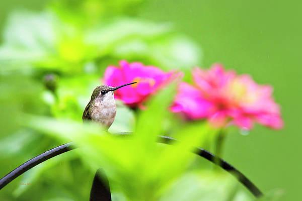 Photograph - Pretty Garden Jewel by Christina Rollo