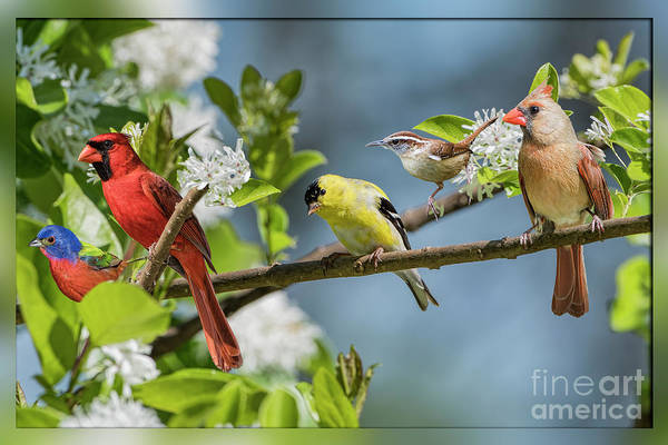 Wall Art - Photograph - Pretty Little Songbirds Sitting In A Row by Bonnie Barry
