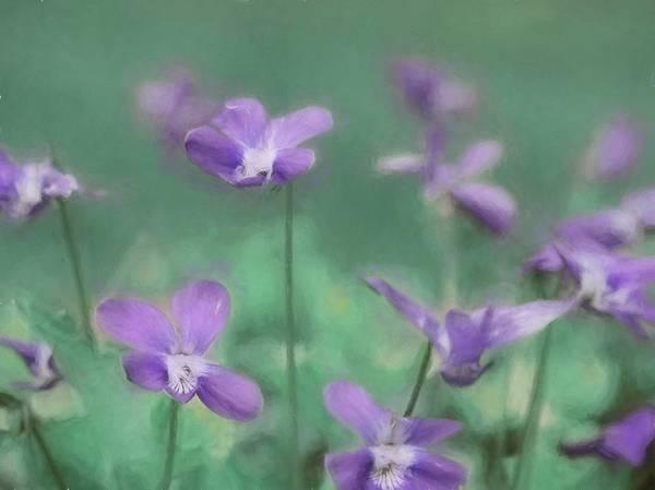 Wall Art - Photograph - Pretty Little Violets by Lori Deiter