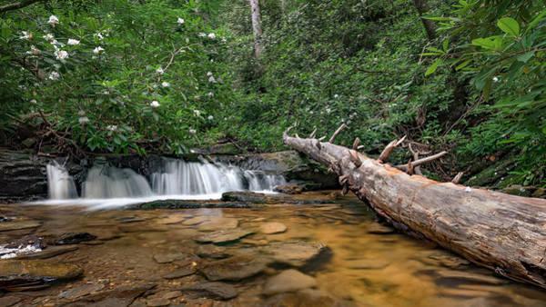 Photograph - Pretty Nc Scenic Creek by Patrick M Lynch