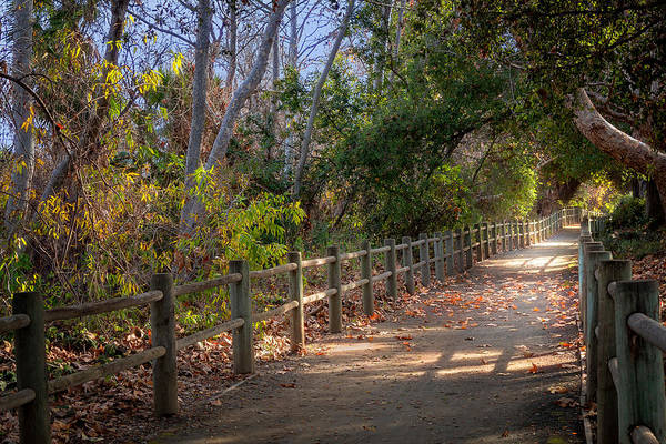 Photograph - Pretty Path by Alison Frank