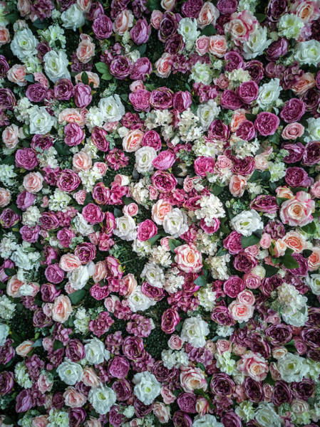 Photograph - Pretty Pattern Of Pink And White Roses by Jaroslaw Blaminsky
