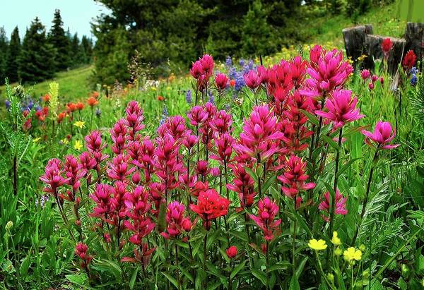 Photograph - Pretty Pink Paintbrush by Lynn Bauer