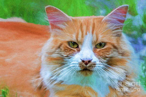 Wall Art - Digital Art - Pretty Tabby 3290ttibc by Doug Berry