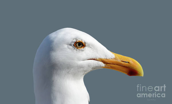 Photograph - Pretty Western Gull In Profile by Susan Wiedmann