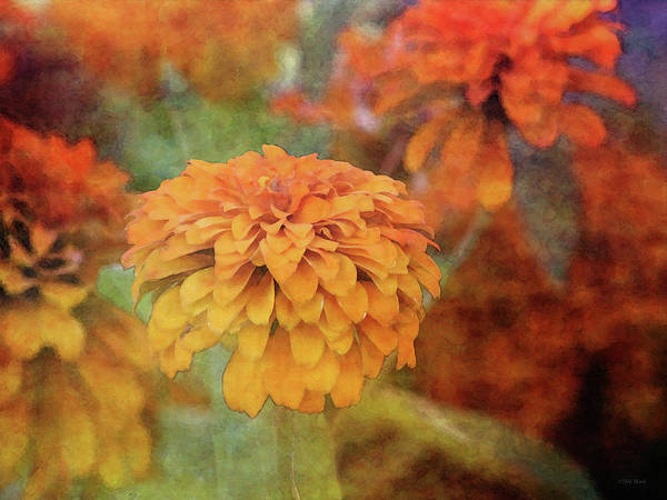 Photograph - Preview 4117 Idp_2 by Steven Ward