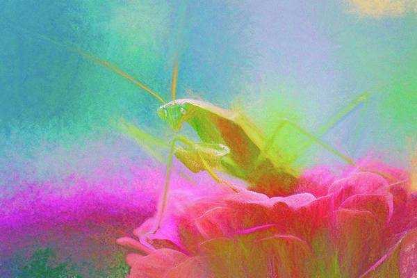 Photograph - Preying Mantis Chalk Smudge by Don Northup
