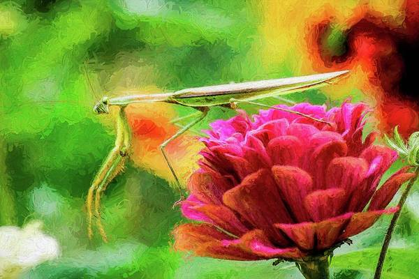 Photograph - Preying Mantis Looking At You by Don Northup