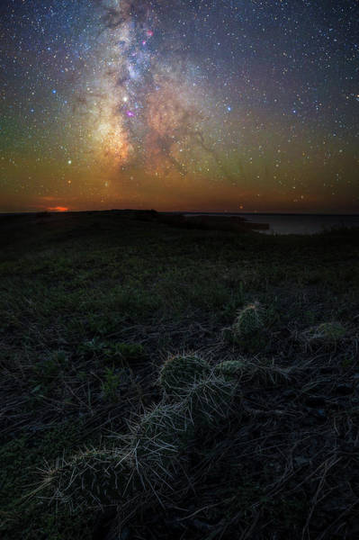 Pokes Wall Art - Photograph - Pricked  by Aaron J Groen