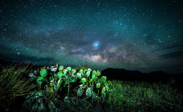 Photograph - Prickly Pear Beneath The Milky Way by David Morefield