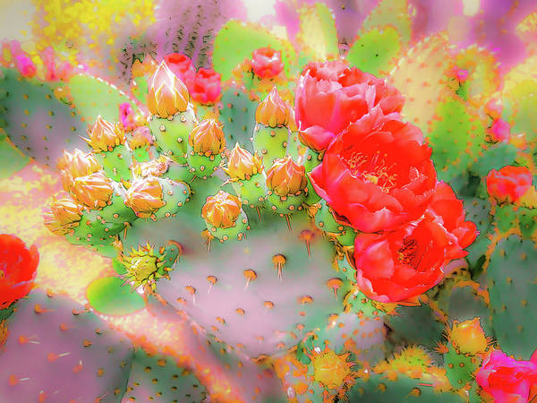 Mixed Media - Prickly Pear Buds And Blooms by Veronika Countryman