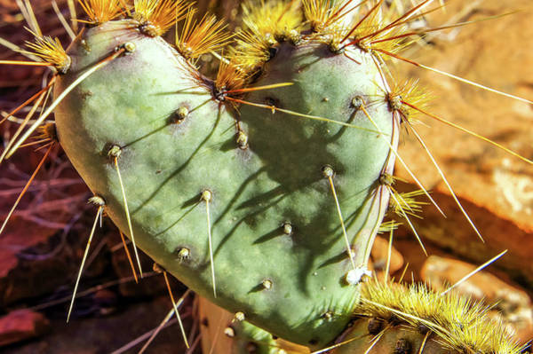 Photograph - Prickly Pear Heart 2 by Dawn Richards