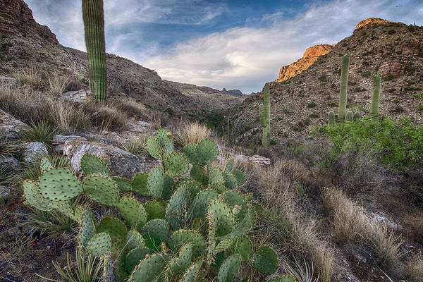 Photograph - Prickly Pear Hillside by Dave Dilli
