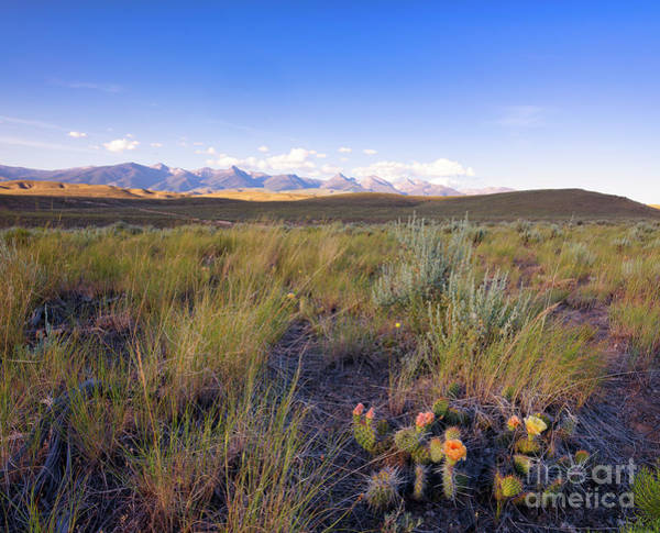Wall Art - Photograph - Prickly Pear In The Foothills by Idaho Scenic Images Linda Lantzy