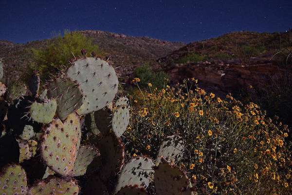 Photograph - Prickly Pear Moonlight by Chance Kafka
