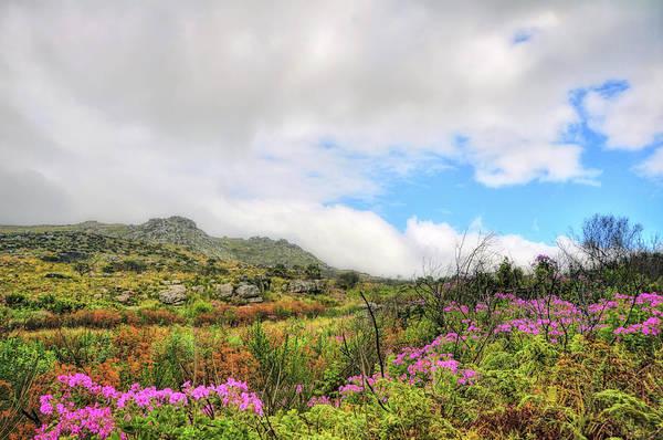 Photograph - Pride Of De Kaap by JAMART Photography