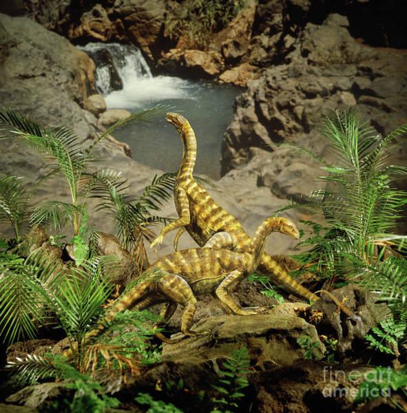 Photograph - Primitive Prosauropods by Warren Photographic