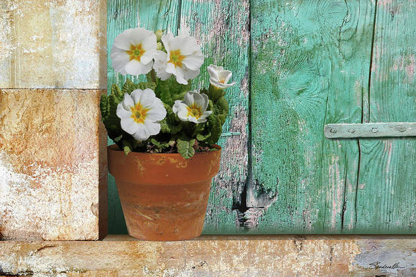 Wall Art - Digital Art - Primrose Flower On Window Sill by M Spadecaller
