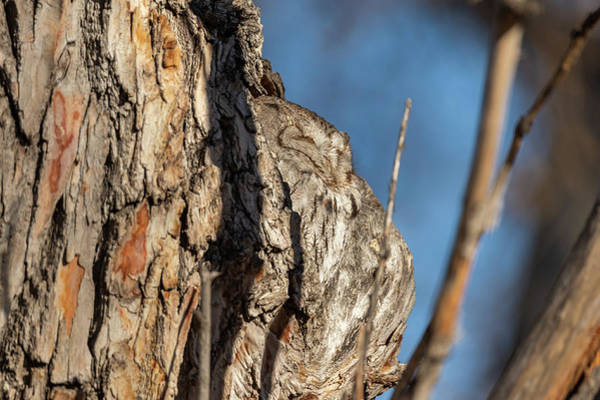 Photograph - Profile Of An Eastern Screech Owl by Tony Hake