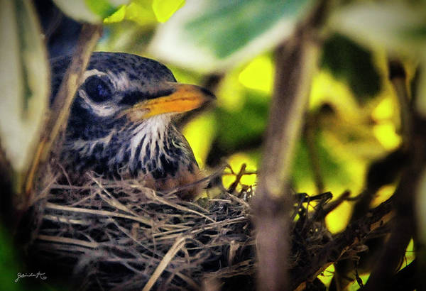 Photograph - Protecting The Eggs by Gerlinde Keating - Galleria GK Keating Associates Inc