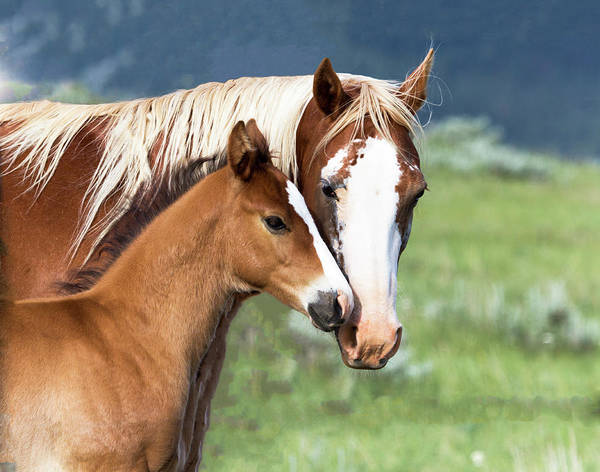 Photograph - Proud Mommy by Michael Chatt