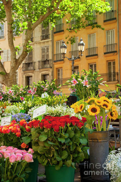 Photograph - Provence Flower Market by Brian Jannsen