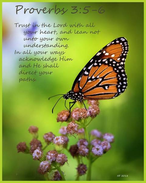 Photograph - Proverbs 3   by Harriet Feagin