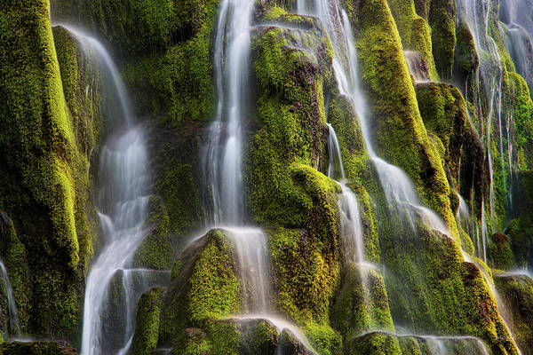Photograph - Proxy Falls Form And Light by Leland D Howard