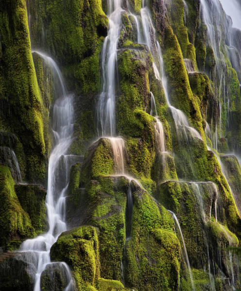 Photograph - Proxy Falls Textures by Leland D Howard