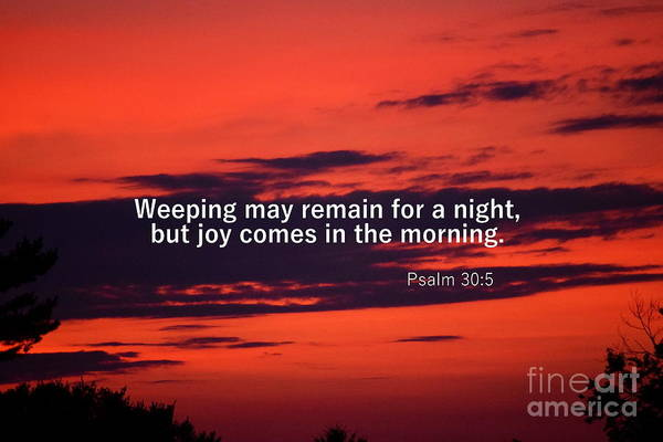 Photograph - Psalm 305 by Patti Whitten