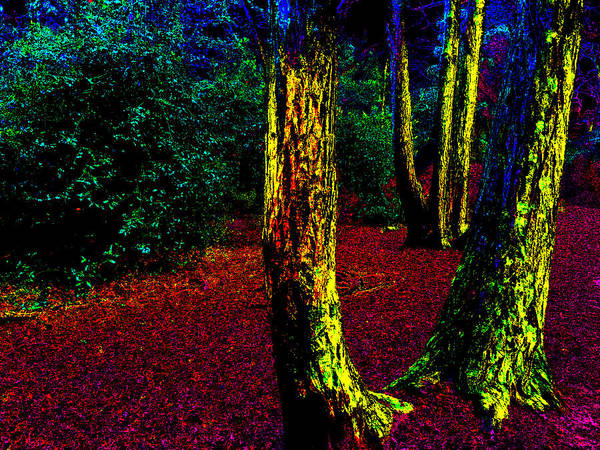 Photograph - Psychedelic Night Forest Trees In Highgate Woods 522 by Artist Dot