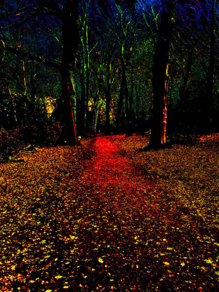 Photograph - Psychedelic Night Forest Trees In Highgate Woods 532 by Artist Dot