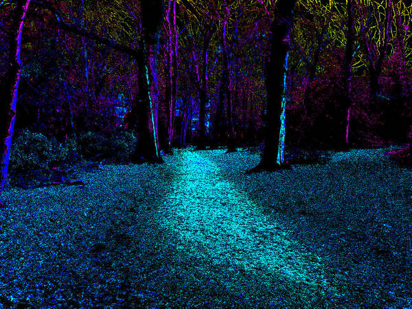 Photograph - Psychedelic Night Forest Trees In Highgate Woods 541 by Artist Dot