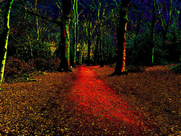 Photograph - Psychedelic Night Forest Trees In Highgate Woods 542 by Artist Dot