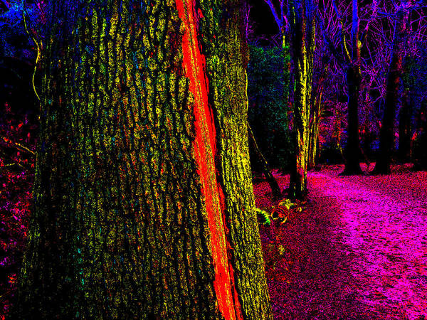 Photograph - Psychedelic Night Forest Trees In Highgate Woods 562 by Artist Dot