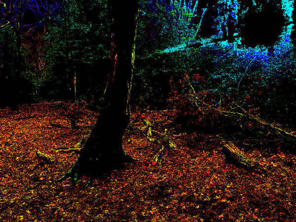 Photograph - Psychedelic Night Forest Trees In Highgate Woods 592 by Artist Dot