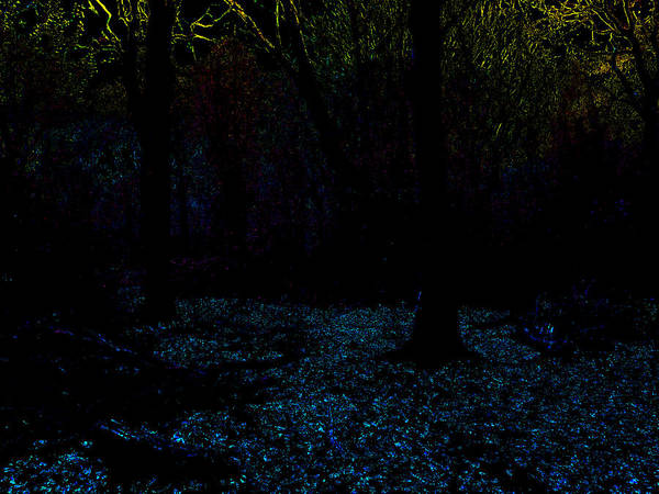Photograph - Psychedelic Night Forest Trees In Highgate Woods 621 by Artist Dot