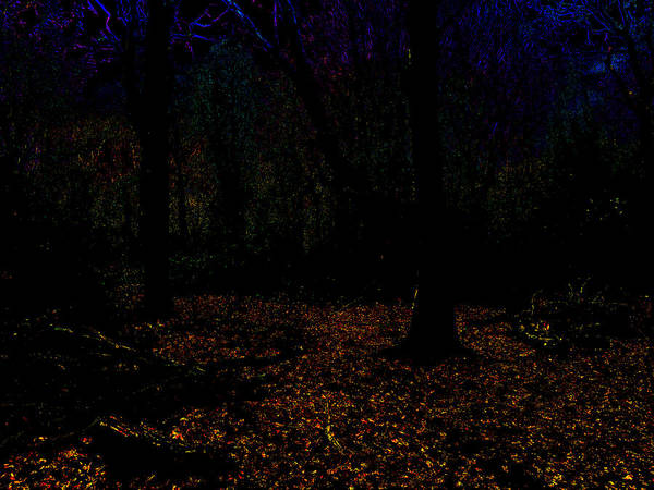 Photograph - Psychedelic Night Forest Trees In Highgate Woods 622 by Artist Dot