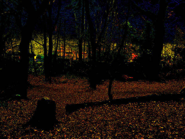 Photograph - Psychedelic Night Forest Trees In Highgate Woods 632 by Artist Dot