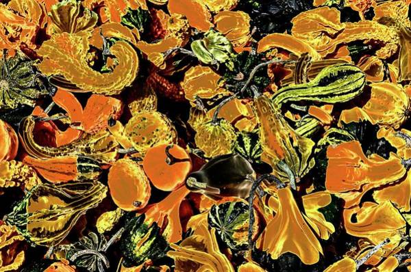 Photograph - Psychedelic Winter Squash 2 by Paul Croll