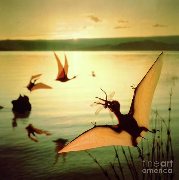Photograph - Pterosaurs At Lake Baringo by Warren Photographic