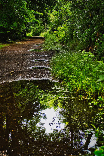 Photograph - Puddles In The Forest Path - Scotland by Stuart Litoff