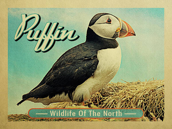 Atlantic Digital Art - Puffin Bird - Wildlife Of The North by Flo Karp