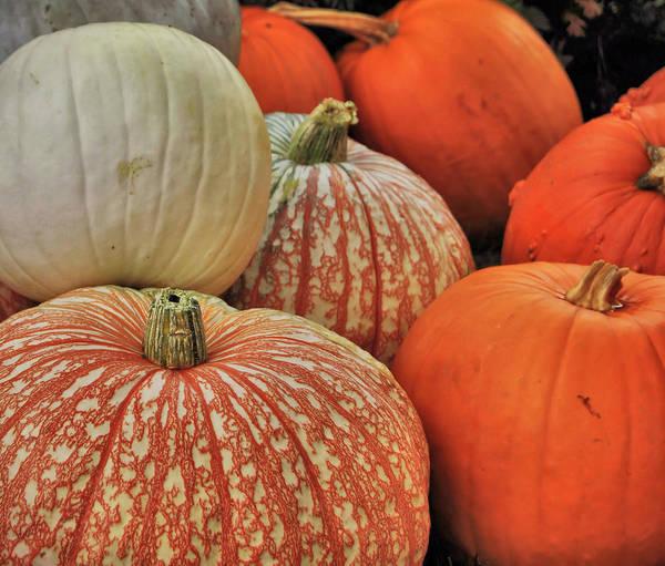 Photograph - Pumpkin Colors by JAMART Photography
