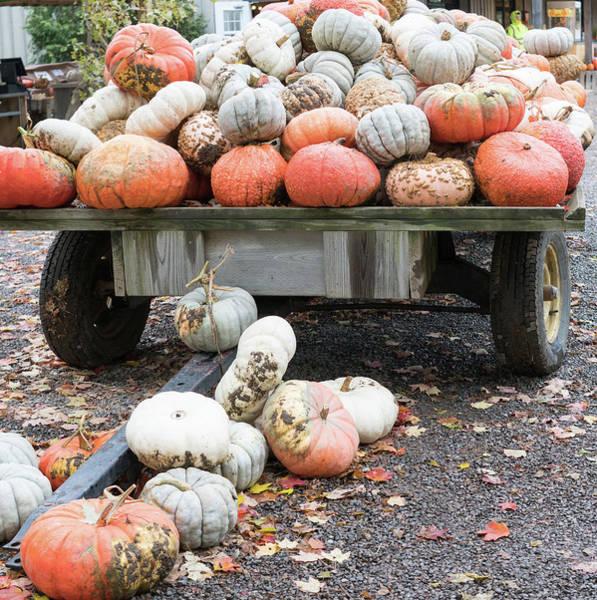 Photograph - Pumpkin Display by Nick Mares
